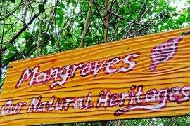 Wisata Mangrove Luppung Manyampa Bulukumba siap jadi percontohan nasional