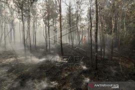 Kebakaran Hutan Di Kawasan Bandara Hang Nadim Page 1 Small