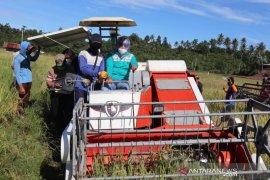 Pemkab Buol  maksimalkan empat program strategis ketahanan pangan