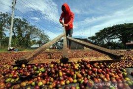 Manggarai  Timur NTT ekspor 36 ton kopi robusta ke Belanda
