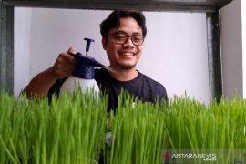 Belajar dari Acen, pebisnis rumput gandum kucing