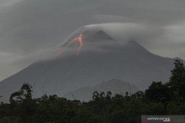 BTNGM sebut pemulihan hutan terdampak erupsi Merapi butuh puluhan tahun