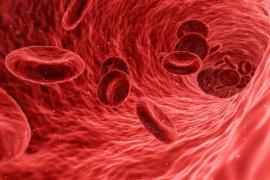 Bahayanya Hemofilia yang tak ditangani