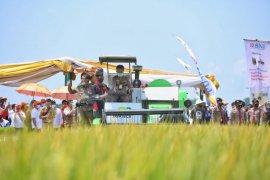 Produksi padi di Lampung naik 22,47 persen