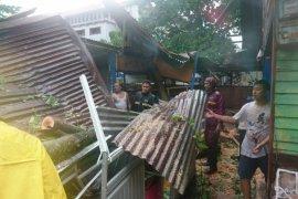 Pohon tumbang terjadi di 21 titik di Padang