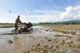 Parigi Moutong  kembangkan pertanian berbasis teknologi