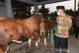 Gubernur targetkan populasi sapi di Sumbar meningkat