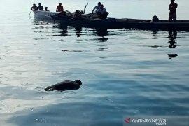 Nelayan yang hilang di perairan Muna Barat ditemukan meninggal