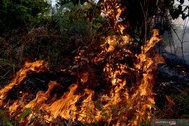 100 dari 374 perusahaan perkebunan Riau teken komitmen cegah Karhutla