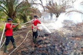 Satgas Karhutla Pelalawan padamkan titik api di Desa Sering