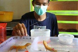 Wirausahawan Gecko Manfaatkan Pemasaran Digital