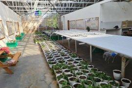 PLN penuhi kebutuhan listrik untuk usaha hortikultura di Labuan Bajo