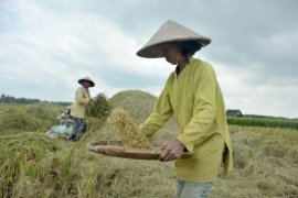 Sumatera Selatan dorong peningkatan  intensitas pertanaman padi