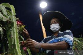 "PLN hadirkan \""Electrifying Agriculture\"" ramah lingkungan bagi petani"