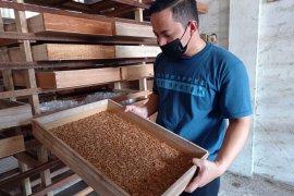 Karang taruna di Padang raup jutaan rupiah dari budidaya ulat Hongkong