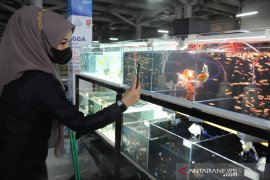 Sentra ikan hias resmi dibuka di Pasar Ikan Modern Palembang Page 3 Small