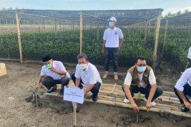 Rehabilitasi mangrove 56 ha di NTB ditargetkan sebelum Lebaran