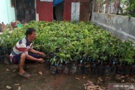 Ribuan bibit buah unggul dibagikan KSDA bantu ekonomi warga Agam