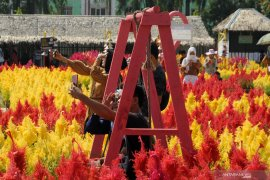 Wisata taman bunga celosia di Palembang Page 2 Small