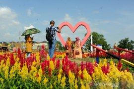 Wisata taman bunga celosia di Palembang Page 5 Small