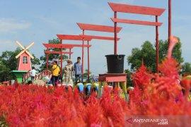 Wisata taman bunga celosia di Palembang Page 4 Small