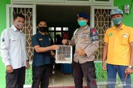 Kisah anggota Brimob Polda Sumbar selamatkan satwa dilindungi jenis kukang di Agam