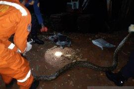 Damkar Jaksel evakuasi ular sanca dari rumah warga di Jagakarsa