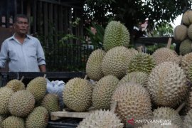 Panen Durian Page 1 Small
