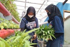 """Mendulang rupiah \""""urban farming\"""""""