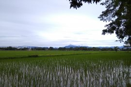 Bulog: Stok beras Sulselbar melimpah hingga 40 bulan ke depan