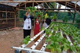 Hidroponik, aktivitas bertani manfaatkan lahan terbatas