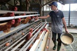 Peternak di Kota Palembang perlu waspadai musim pancaroba