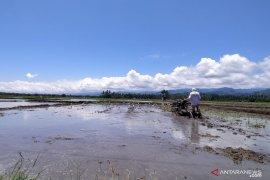 Potensi pertanian Parigi Moutong penyumbang ketahanan pangan Sulteng