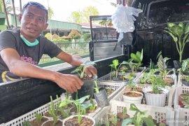 Penjualan Tanaman Hias di Sisingamangaraja  Padang Meningkat Dampak Covid-19