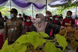 Karantina Pertanian Lampung dorong tanaman hias Tanggamus tembus pasar internasional