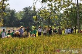 Pemkab Kulon Progo diminta selektif memberikan bantuan benih padi