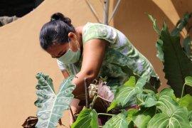 Lampung mulai lirik potensi ekspor tanaman hias