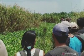 Seorang warga Banyuasin hilang  diduga diserang buaya
