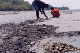 "\""Ngabuburit\"" sambil mencari kerang laut di Pantai Mutiara Baru"