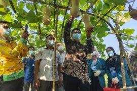 Arowisata Unila tawarkan beragam macam buah untuk dipetik