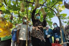 Agrowisata Unila tawarkan beragam macam buah untuk dipetik wisatawan