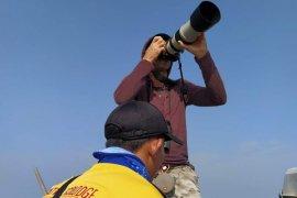 Disinggahi berbagai jenis burung migran, Pantai Mutiara Baru jadi lokasi pengamatan burung