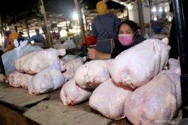 Daging ayam di Kota Kupang tebus Rp65 ribu per ekor