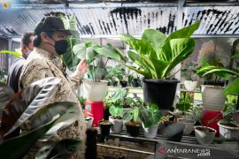 Airlangga HArtanto minta ekspor tanaman hias penuhi ceruk pasar dunia