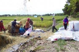 Sebangun Bumi Andalas bantu optimalkan lahan pertanian petani OKI
