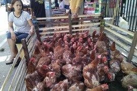 Harga ayam potong di Makassar mulai bergerak naik