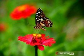 Catatan Asro Kamal Rokan - Puasa ulat dan kenangan masa kecil