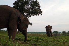 Pusat Latihan Gajah Way Kambas masih tutup