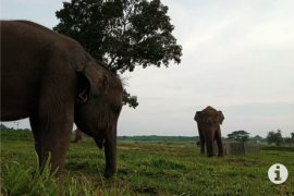 Pusat Latihan Gajah Way Kambas Lampung Timur masih tutup