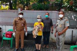 Sunter Agung gencar vaksinasi rabies puluhan ekor anjing dan kucing